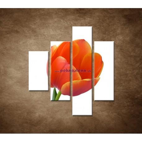 Obrazy na stenu - Tulipán - detail - 4dielny 80x90cm