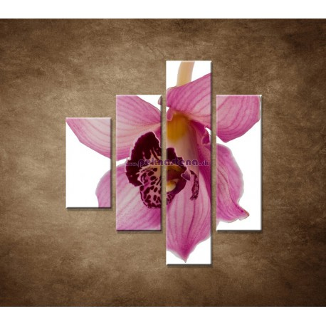 Obrazy na stenu - Orchidea - detail - 4dielny 80x90cm