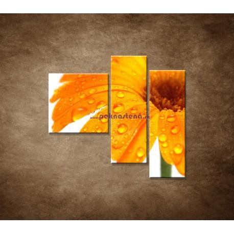 Obrazy na stenu - Oranžová gerbera - 3dielny 110x90cm