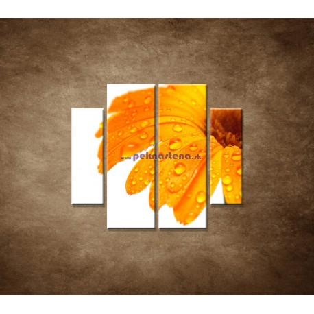 Obrazy na stenu - Oranžová gerbera - 4dielny 100x90cm