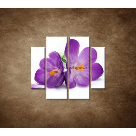 Obrazy na stenu - Krokus - 4dielny 100x90cm