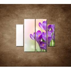 Obrazy na stenu - Krokusy - 4dielny 100x90cm