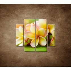 Obrazy na stenu - Žltá orchidea - 4dielny 100x90cm