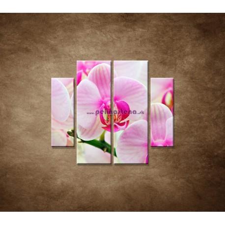 Obrazy na stenu - Ružová orchidea - 4dielny 100x90cm