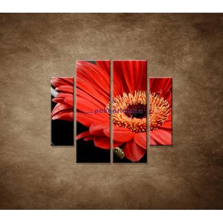 Obrazy na stenu - Gerbera - 4dielny 100x90cm