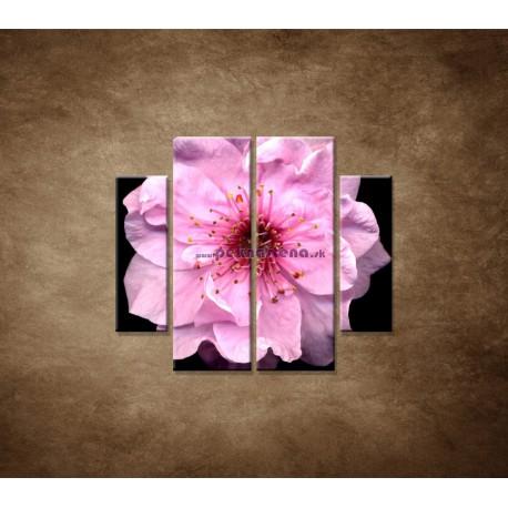Obrazy na stenu - Kvet čerešne - 4dielny 100x90cm