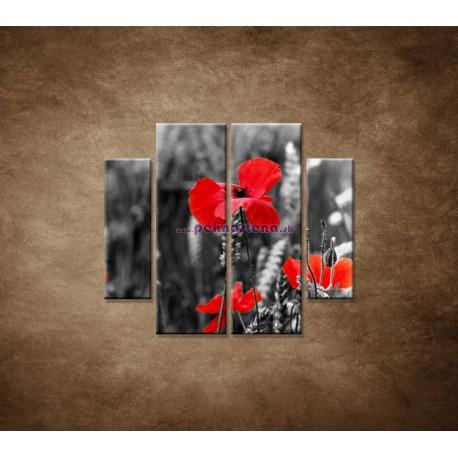 Obrazy na stenu - Červené vlčie maky - 4dielny 100x90cm