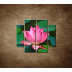 Obrazy na stenu - Lekno 2 - 4dielny 100x90cm