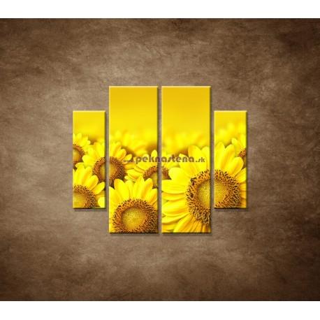 Obrazy na stenu - Lúka slnečníc - 4dielny 100x90cm
