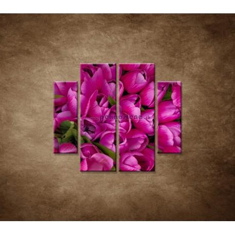 Obrazy na stenu - Krásne tulipány - 4dielny 100x90cm