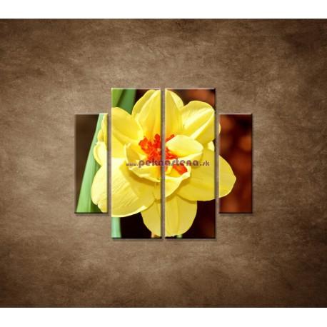 Obrazy na stenu - Narcis - detail - 4dielny 100x90cm
