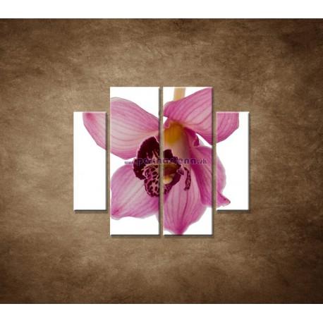Obrazy na stenu - Orchidea - detail - 4dielny 100x90cm