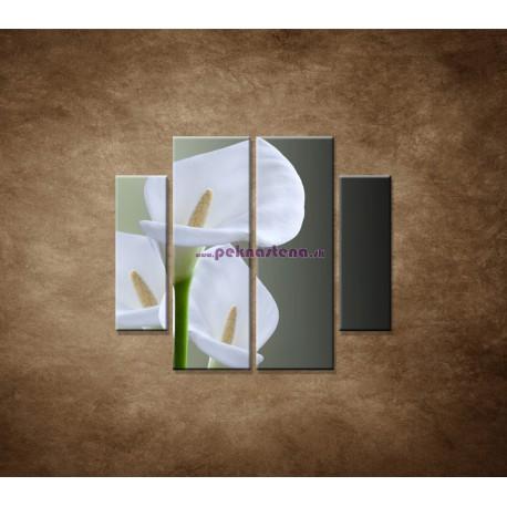 Obrazy na stenu - Tri biele kaly - 4dielny 100x90cm