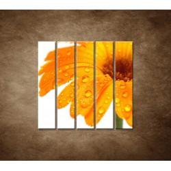 Obrazy na stenu - Oranžová gerbera - 5dielny 100x100cm