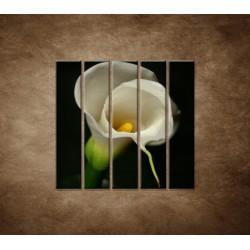 Obrazy na stenu - Kala - 5dielny 100x100cm