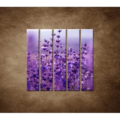 Obrazy na stenu - Levanduľa - 5dielny 100x100cm