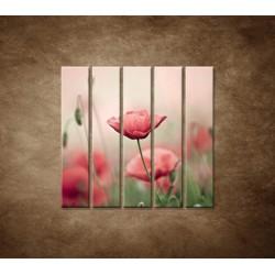 Obrazy na stenu - Vlčie maky - 5dielny 100x100cm