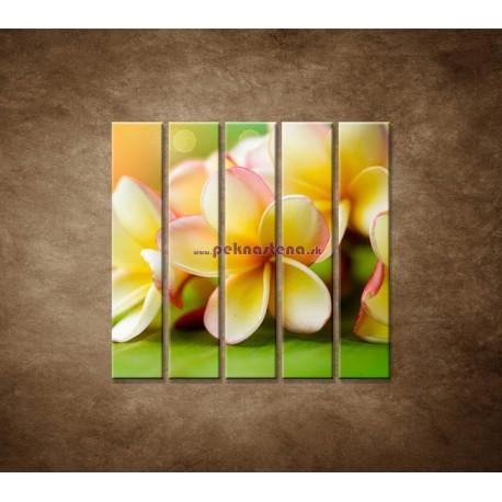 Obrazy na stenu - Žltá orchidea - 5dielny 100x100cm