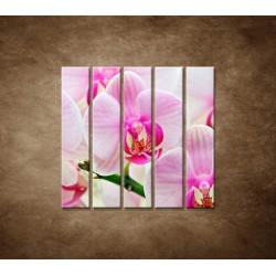 Obrazy na stenu - Ružová orchidea - 5dielny 100x100cm
