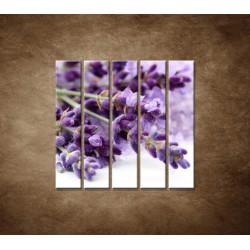 Obrazy na stenu - Kvet levandule - 5dielny 100x100cm