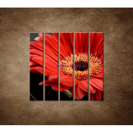 Obrazy na stenu - Gerbera - 5dielny 100x100cm