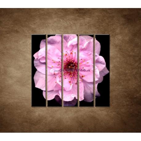 Obrazy na stenu - Kvet čerešne - 5dielny 100x100cm